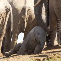 addo-elephant - addo_elephant_37.jpg