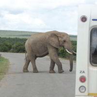 addo-elephant - addo_elephant_38.jpg
