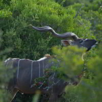 addo-elephant - addo_elephant_48.jpg