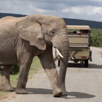 addo-elephant - addo_elephant_66.jpg
