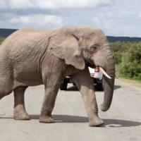 addo-elephant - addo_elephant_67.jpg