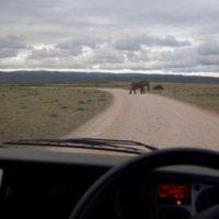 addo-elephant - addo_elephant_78.jpg