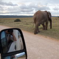 addo-elephant - addo_elephant_79.jpg