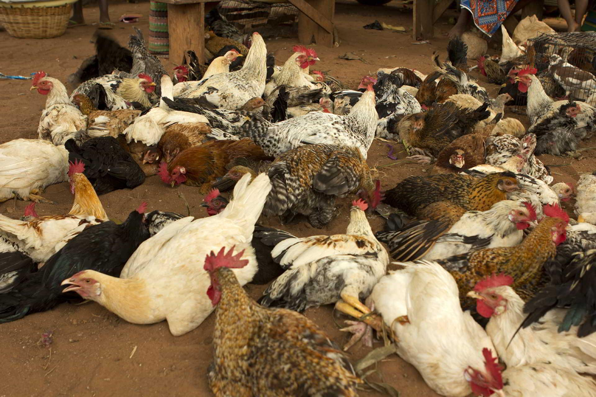 benin2012 - Wyprawa_do_Beninu_-2012_203.jpg