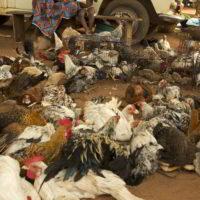 benin2012 - Wyprawa_do_Beninu_-2012_204.jpg