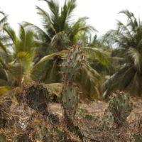 benin2012 - Wyprawa_do_Beninu_-2012_264.jpg
