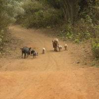benin2012 - Wyprawa_do_Beninu_-2012_37.jpg