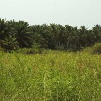 benin2012 - Wyprawa_do_Beninu_-2012_46.jpg
