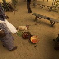 benin2012 - Wyprawa_do_Beninu_-2012_67.jpg