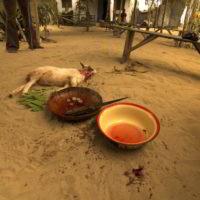 benin2012 - Wyprawa_do_Beninu_-2012_68.jpg