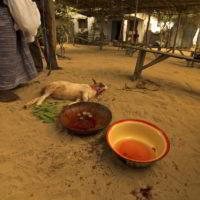 benin2012 - Wyprawa_do_Beninu_-2012_69.jpg