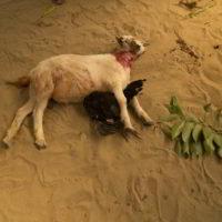 benin2012 - Wyprawa_do_Beninu_-2012_71.jpg