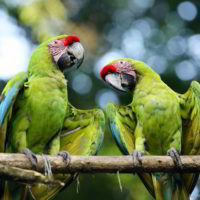 kostaryka - Kostaryka_PuraVida_45.jpg