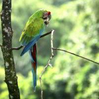 kostaryka - Kostaryka_PuraVida_48.jpg