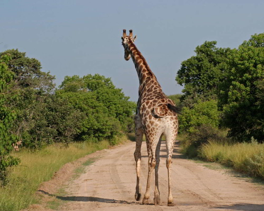 southern-africa-2013 - Southern_Africa_143.jpg